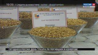Фуражная пшеница в большом количестве в Тамбовской области не нужна