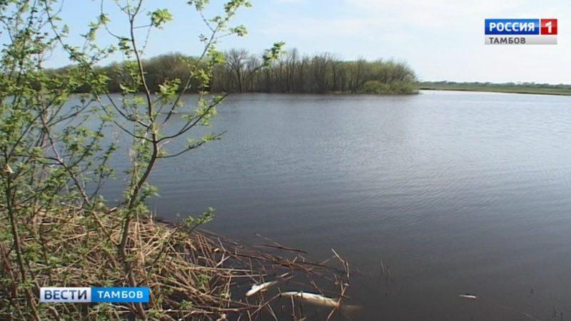 В Барском пруду в Ивановке гибнет рыба