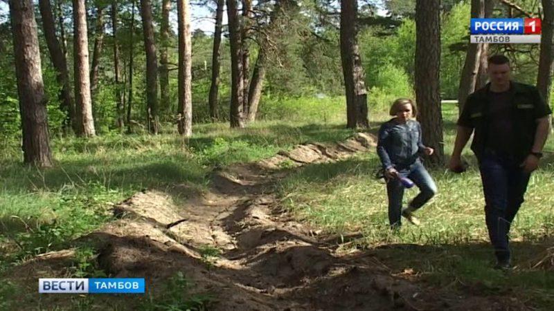 В лесах области перешли на усиленный режим патрулирования