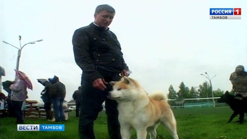 Усы, лапы и хвост: в Тамбове провели выставку собак