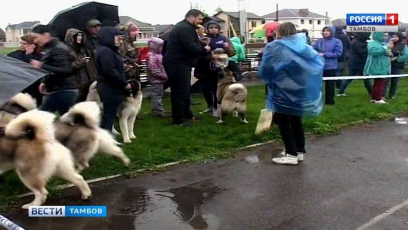 Породу видно: в Тамбове провели выставку собак