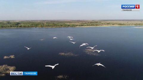 Лебединое озеро в Воронинском заповеднике