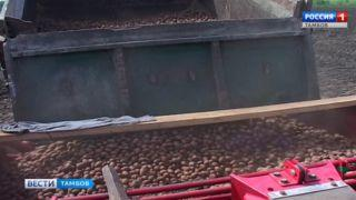 Пойдём сажать картошку: посевная в исправительной колонии