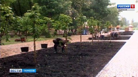В Парке культуры и отдыха Тамбова высадили деревья
