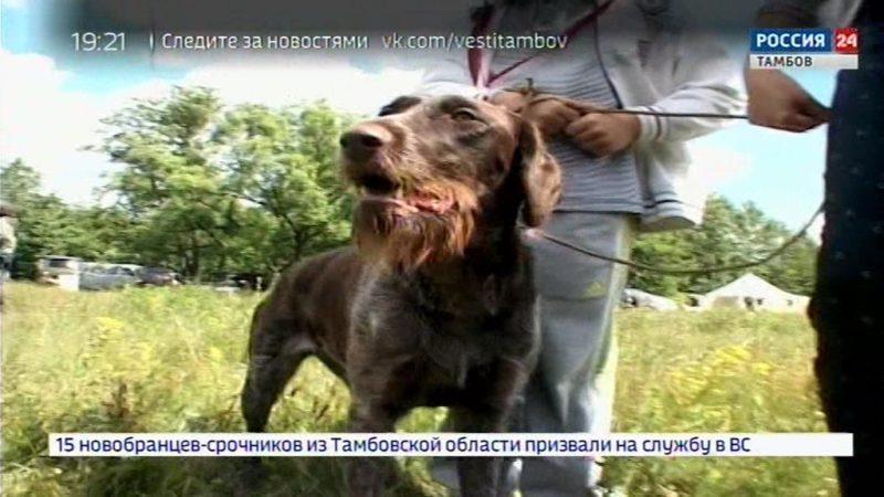 В Тамбове провели VIII Всероссийскую выставку собак породы Дратхаар