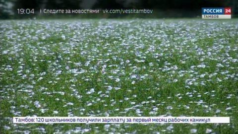 Лучше один раз увидеть: цветение льна подходит к концу