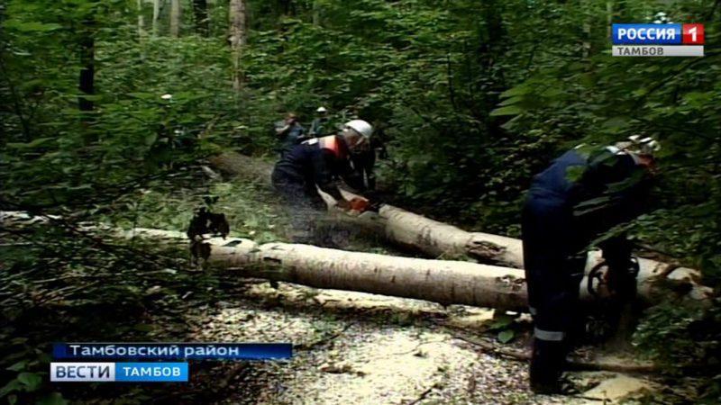 ВПензенской области пройдет субботник врамках конкурса «Зеленый маршрут»
