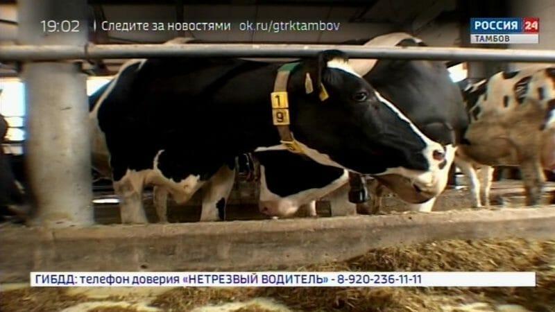Долю местных молочных продуктов на прилавках планируют увеличить за счет реализации крупного проекта