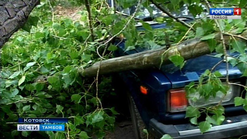 Чье дерево упало на машину в Котовске