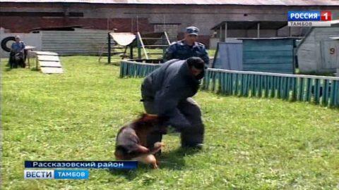 Корреспондент «Вестей Тамбов» на себе испытал железную хватку служебной собаки