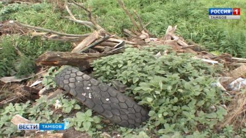 В Сампурском районе Россельхознадзор помогает избавиться от несанкционированной свалки мусора