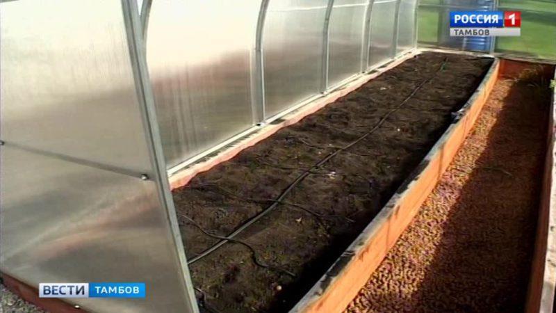 В «Умных теплицах» будут учиться выращивать посадочный материал особо ценных растений региона