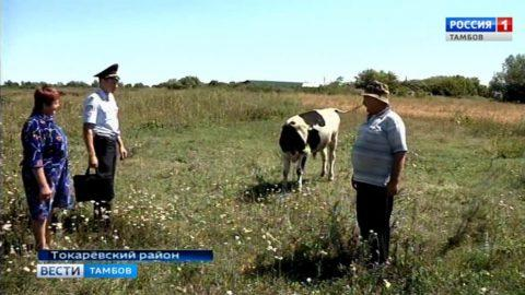 Финал сериала «В ночное»: задержаны злоумышленники, воровавшие коров