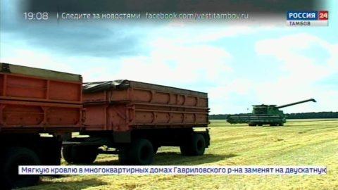 Половину площадей всех зерновых убрали в Знаменском районе