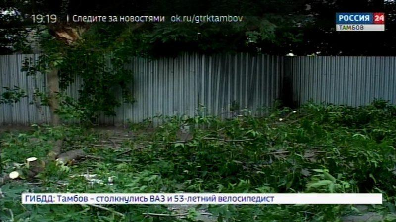 Сильный ветер свалил дерево под окнами ГТРК «Тамбов»