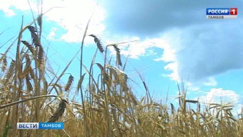 Аграрии Знаменского района убирают пивоваренный ячмень