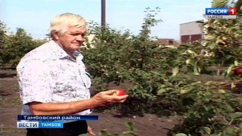Сезон сбора урожая: яблоки хрустят, сок льется