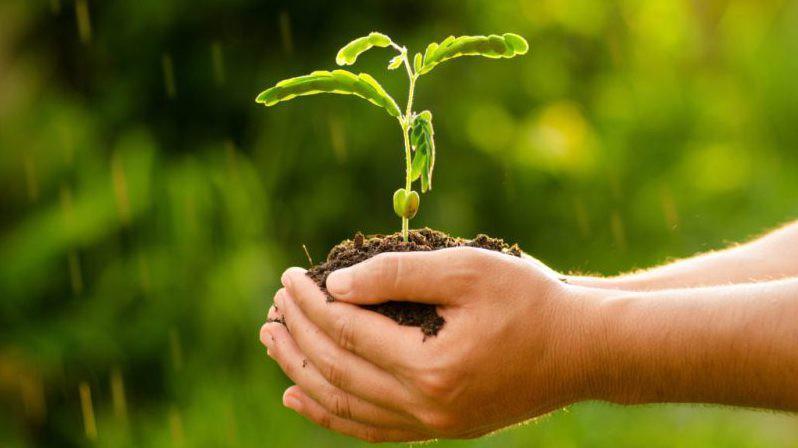 Курянам предлагают 1сентября дарить учителям нецветы, а … деревья