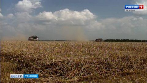 Тамбовские аграрии уже собрали около трёх миллионов тонн зерна