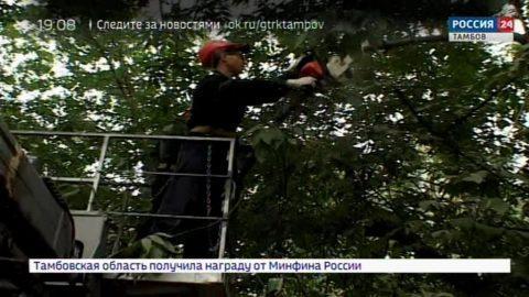 Во дворах Тамбова проводят опиловку деревьев