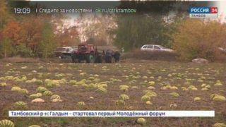 На Инжавинских бахчах собрали рекордный урожай арбузов