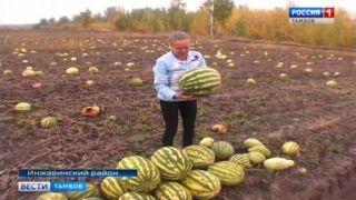 Красивские арбузы – новый бренд Инжавинского района