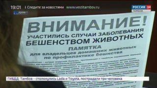 В селе Новая Слобода Сосновского района объявлен карантин по бешенству
