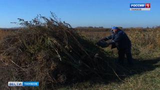 Полицейские сожгли тонну дикорастущей конопли