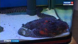 Самая ядовитая рыба в мире и другие экзотические обитатели морей на выставке рыб в Тамбове