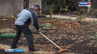 На западе Тамбова высадили деревья