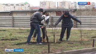 Во дворах Тамбова вырастут катальпы