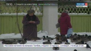 Их и здесь неплохо кормят: утки обживают площадь в Тамбове