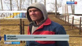 Начинающий фермер из Сосновского района взял «быка за рога»