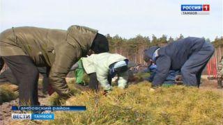 Школьники помогают сохранить тамбовские леса