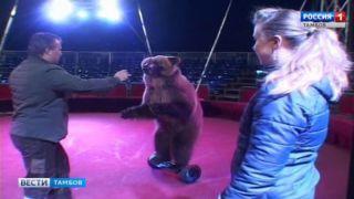 Секреты цирка: путь к актерскому таланту медведя лежит через его желудок