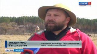 Оленина, сэр! Тамбовские фермеры осваивают альтернативное животноводство