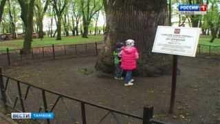 Дуб в Асеевском парке может стать главным деревом страны. Голосуем