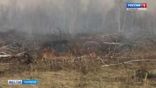 Горят поля синим пламенем: как не допустить пожара