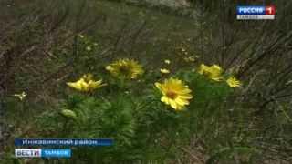 В заповеднике «Воронинский» можно увидеть финикийского Бога весны