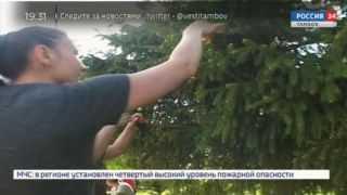Аллея Памяти в парке Победы вновь переливается колокольным звоном