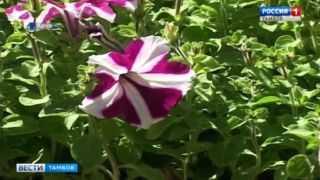 В Тамбове в 13-й раз проведут фестиваль цветов