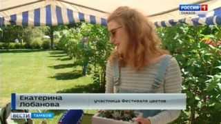 Суккуленты и альпийский мох: на Фестивале цветов растениеводы представили настоящие произведения искусства