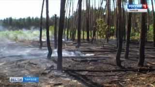 Пожар в лесополосе под Тамбовом: специалисты устанавливают причины
