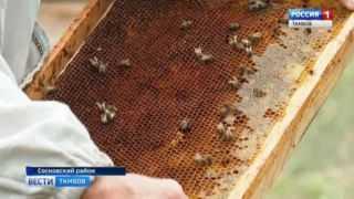 Выжили только трутни: в Сосновском районе - массовый мор пчел