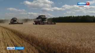 С тамбовских полей собрано почти два миллиона тонн зерновых
