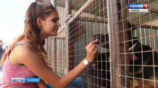 Тамбовчане могут принять участие в жизни бездомных животных